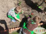 Mali Ogrodnicy 10